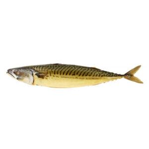 Atlantic Mackerels Hotsmoked