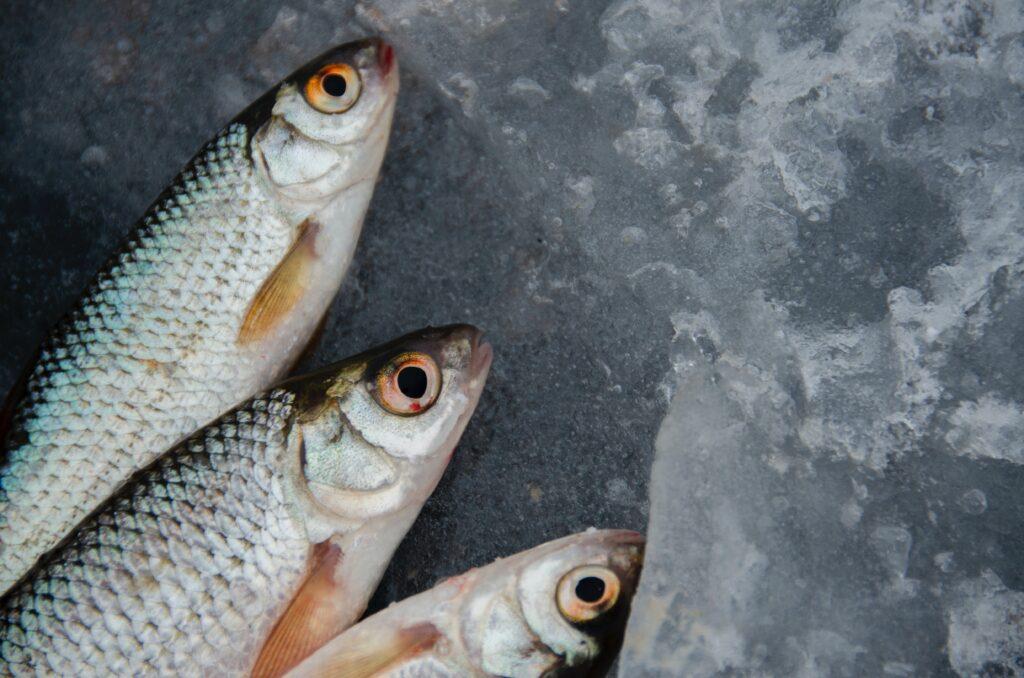 Are you a Pescetarian? -Day Of Tuna